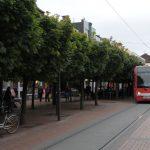 baeume-innenstadt2